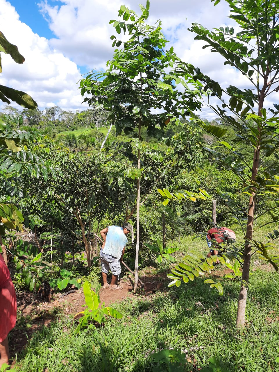 plant-a-tree-planting-charity-native-amazon-rainforest-reforestation-agroforestry-peru-plant-your-future-13