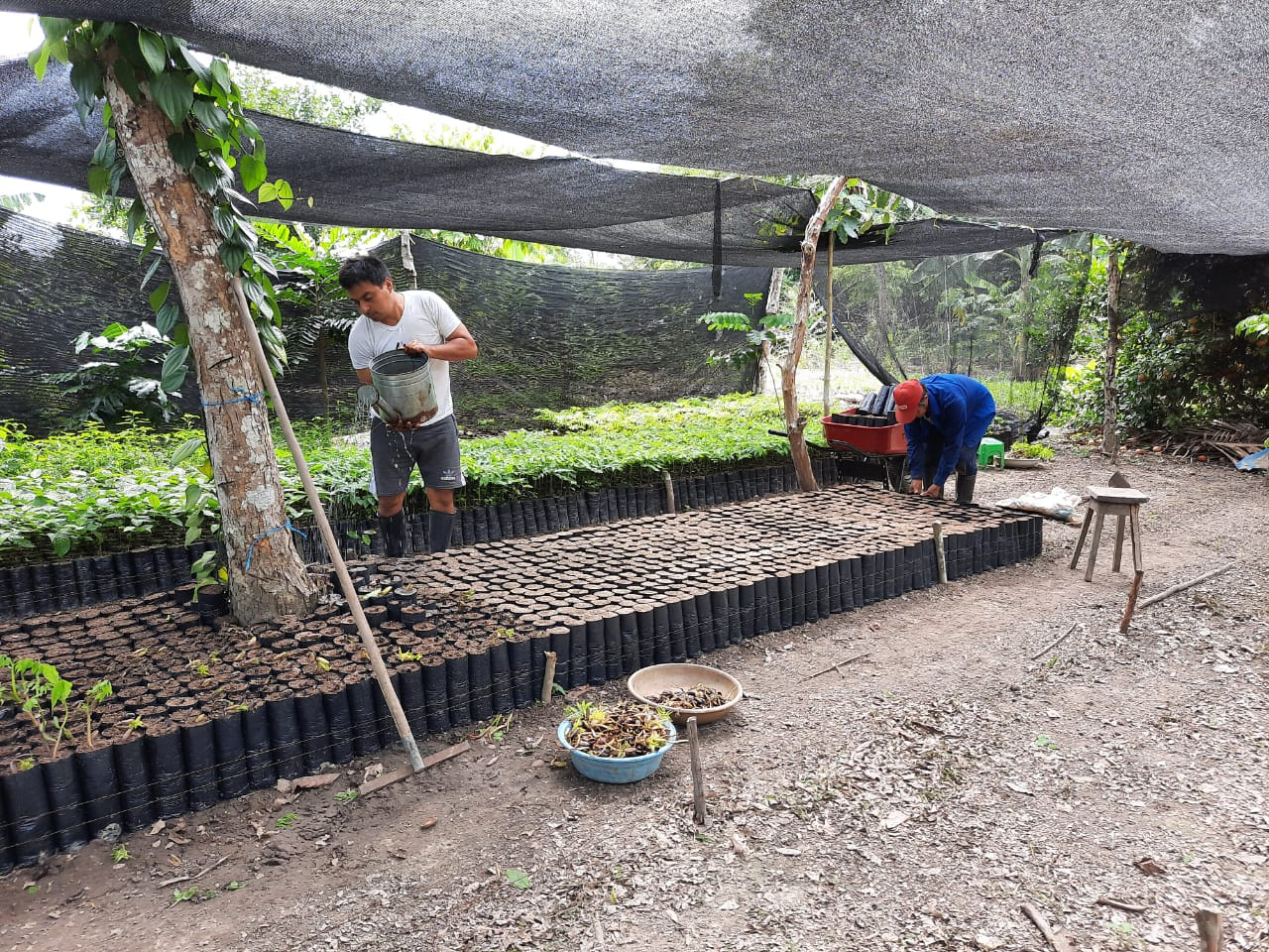 plant-a-tree-planting-charity-native-amazon-rainforest-reforestation-agroforestry-peru-plant-your-future-15