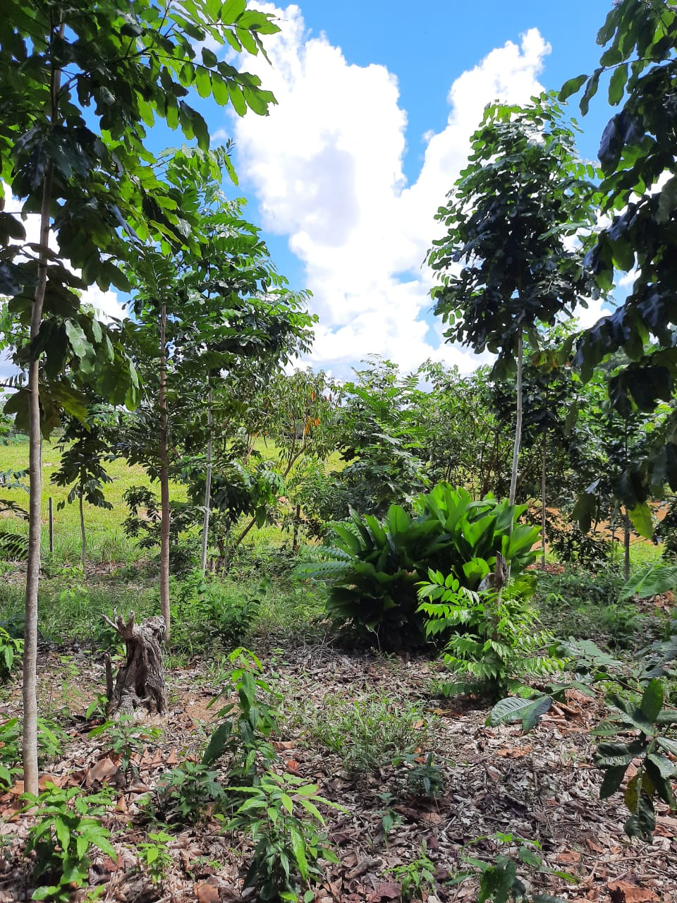 plant-a-tree-planting-charity-native-amazon-rainforest-reforestation-agroforestry-peru-plant-your-future-17