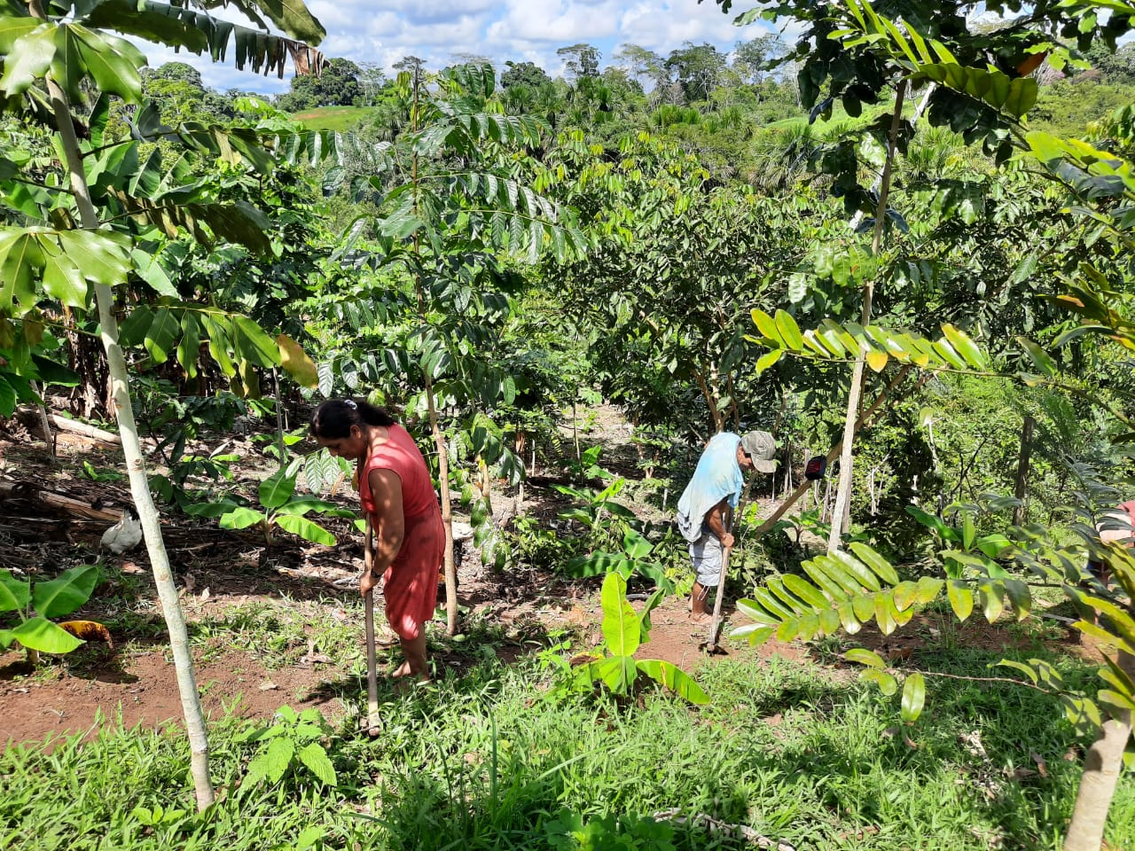 plant-a-tree-planting-charity-native-amazon-rainforest-reforestation-agroforestry-peru-plant-your-future-19