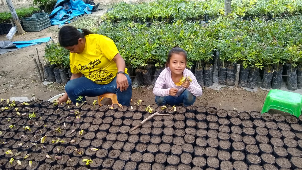 plant-a-tree-planting-charity-native-amazon-rainforest-reforestation-agroforestry-peru-plant-your-future-dipteryx-micrantha-shihuahuaco-1